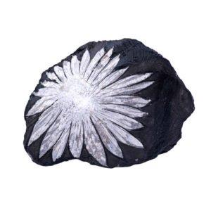 pierre chrysanthème