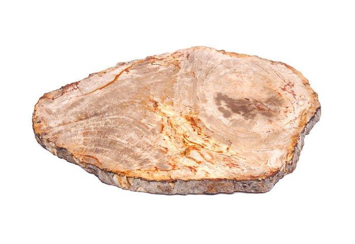 pierre bois fossilisé pétrifié