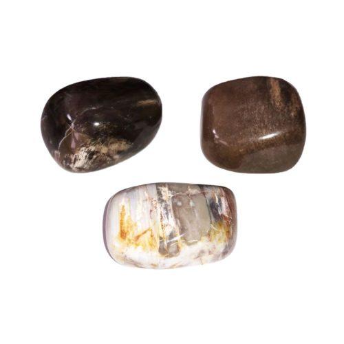 pierre roulée bois fossilisé
