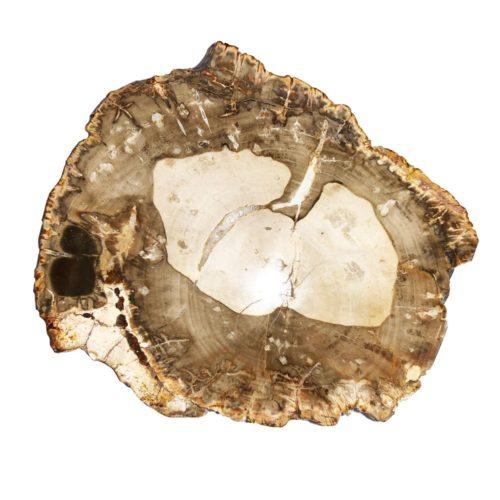 bois-fossilise-mcbf02