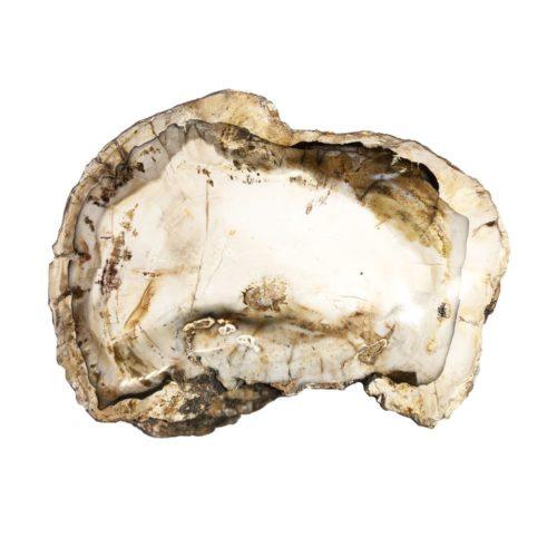 bois-fossilise-mcbf04