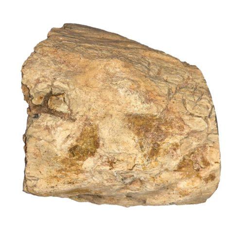 bois-fossilise-mcbf05