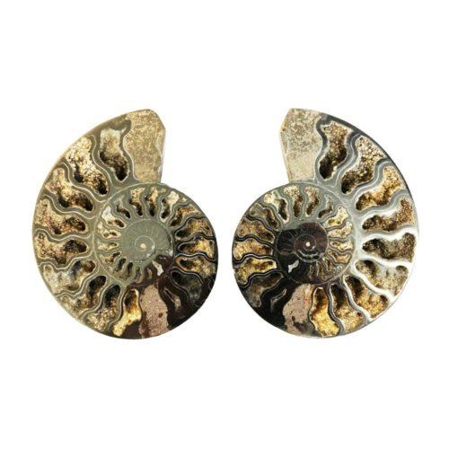 paire-ammonite-mcami10
