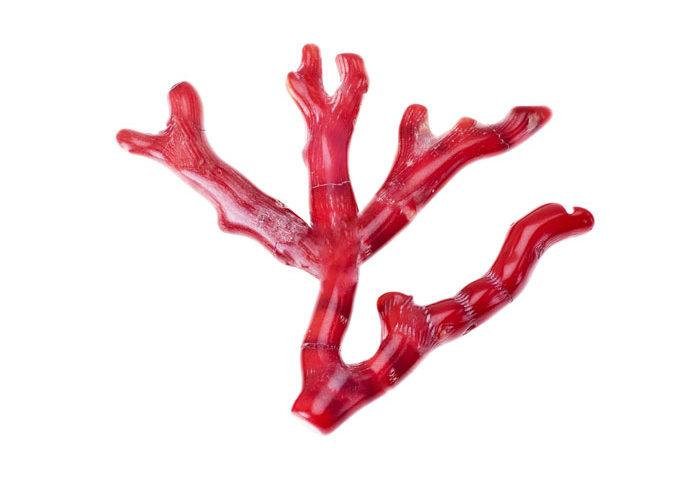 pierre corail rouge